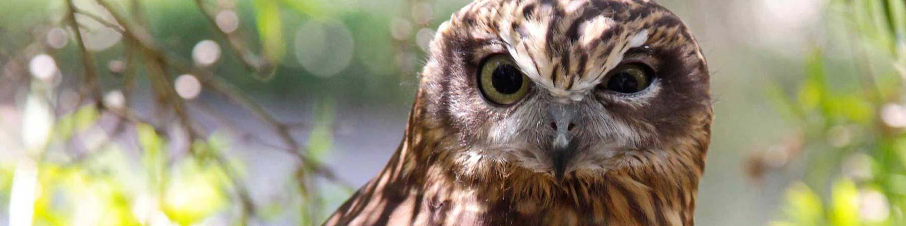 Bird watching 1