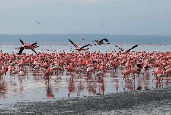 Manyara Lake#