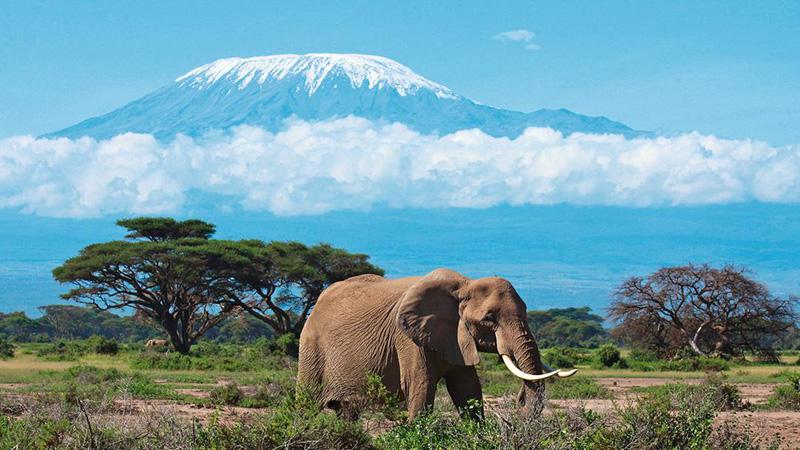 Mount-Elephant