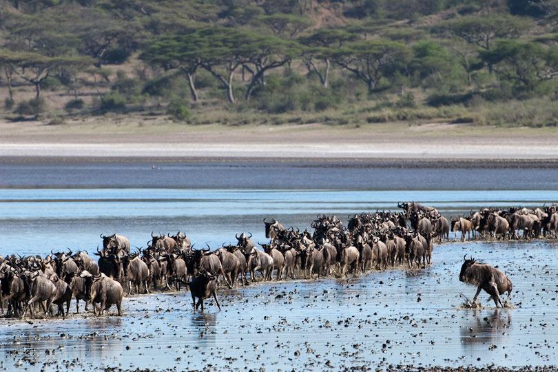 Ndutu Lake