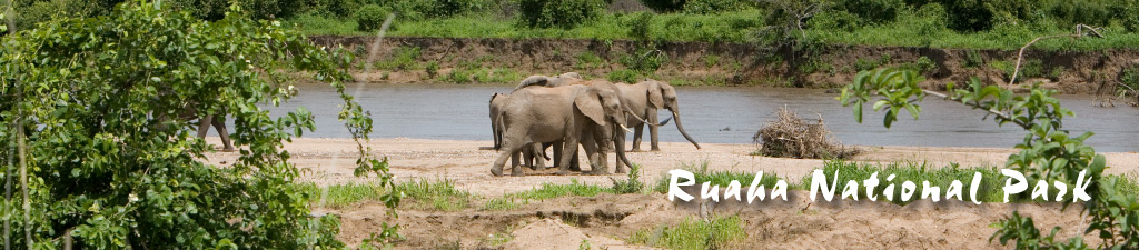 Image result for Ruaha National Park