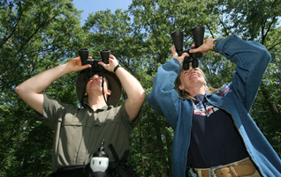 Birds Watching Safaris