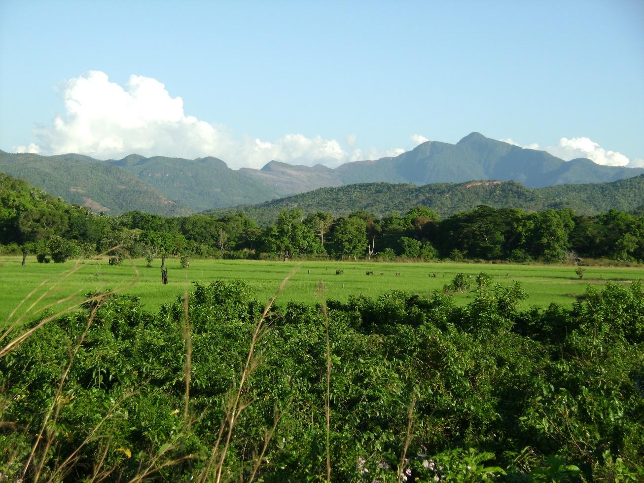 Kitulo nature